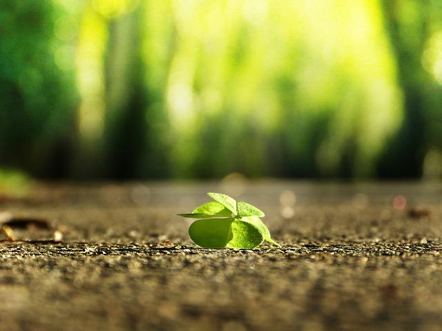 Dejte zdraví zelenou