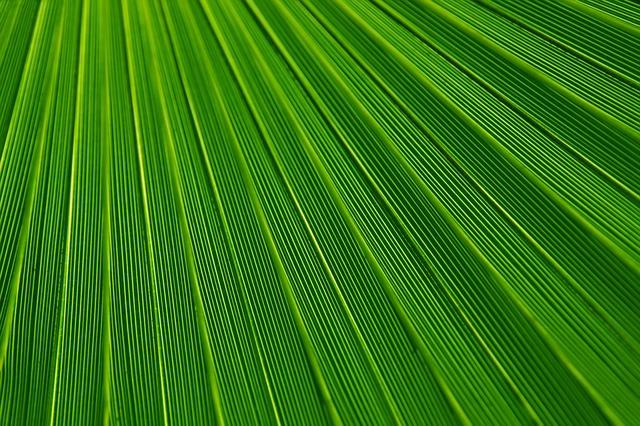 Zelená vlna