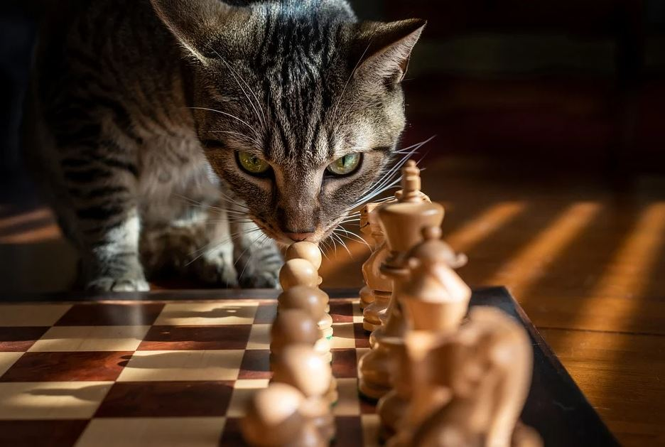 kočka a šachy